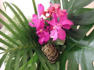Flower Mar 28-2