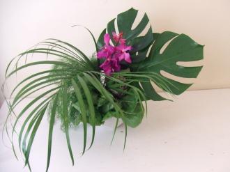 Flower Mar 28-1