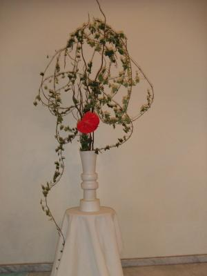 Flower Apr 18 2011-2