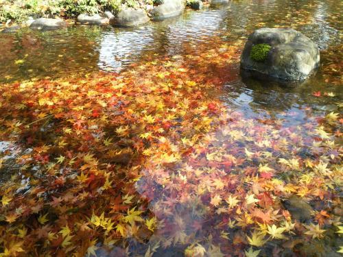 水の流れに(26.11.7)