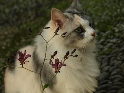 麗しのマロン姫