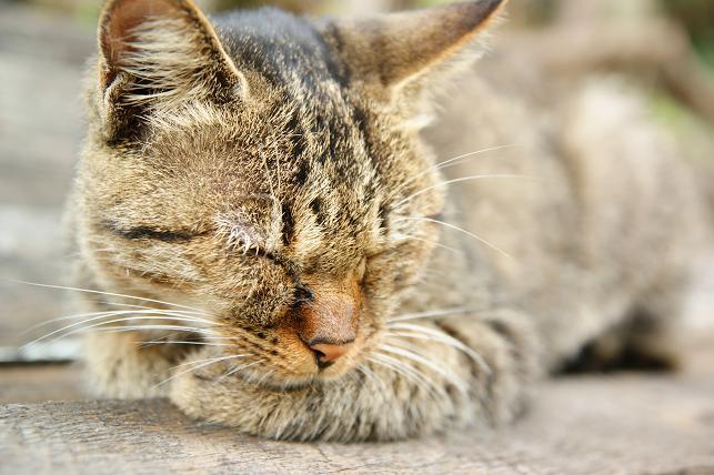 おねむ中の猫ちゃん
