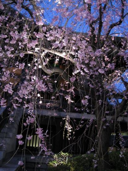 南蔵院10-04-06-05