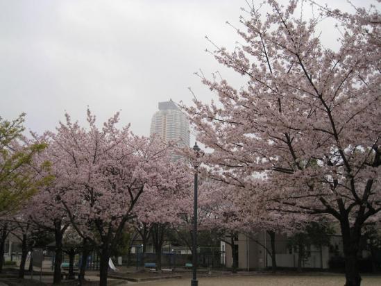 元郷桜10-04-07-03