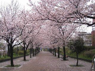 桜10-04-06-10