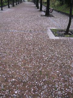 桜10-04-06-11