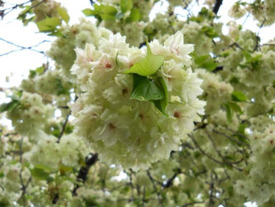 赤羽桜4-21-1