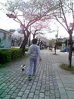 チョコ 兄 花見3