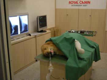 キッザニア 獣医1