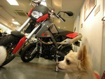 バイク屋4