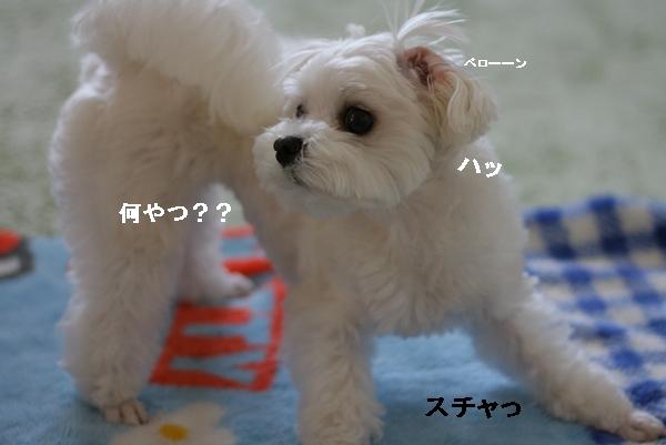 IMG_0149_20110613161937.jpg