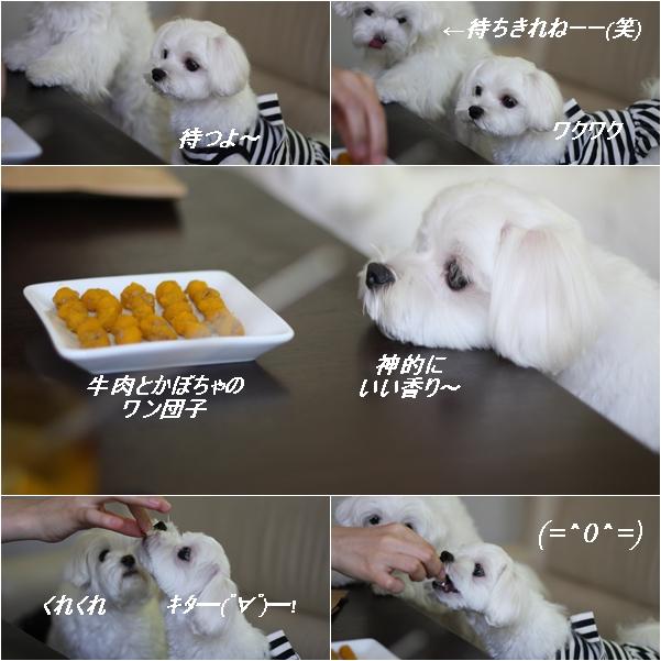 cats13_20110812164934.jpg
