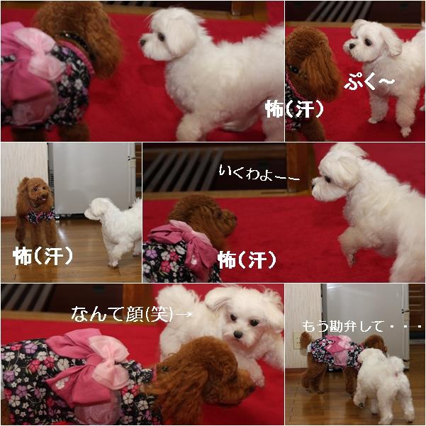 cats2_20110824205128.jpg