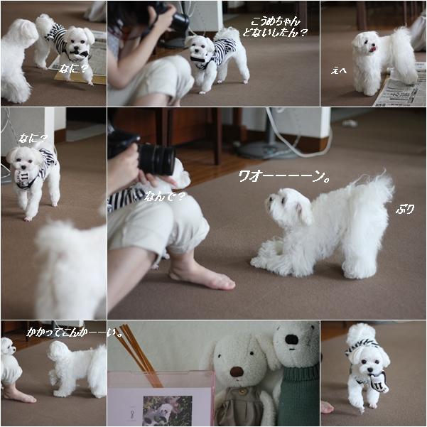 cats_20110812164833.jpg