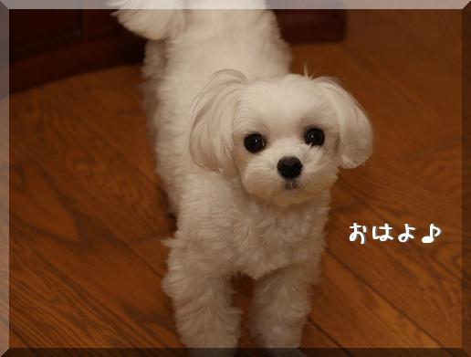ijPYo.jpg