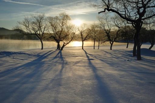 冬の朝の光