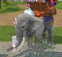 めんまと象