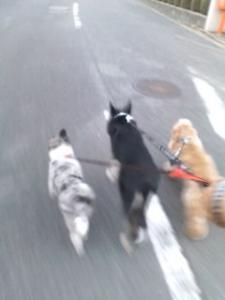20101010172746散歩1