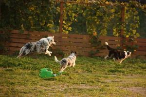 FlyBall 061