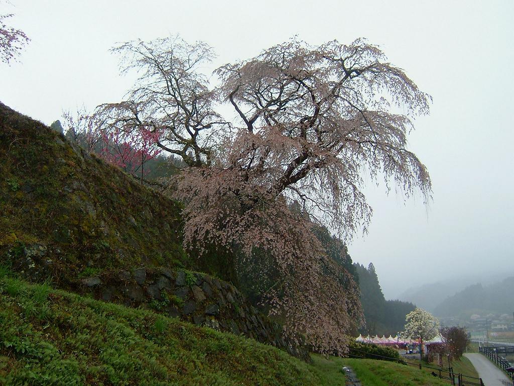 奈良の宇陀市にある又兵衛桜01