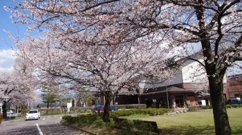 桜20130410-3