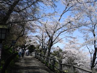 お丸山2010-3