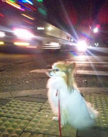 夜中のお散歩