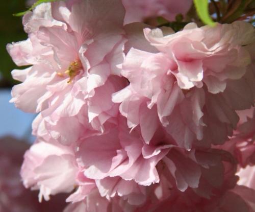 ピンクのグラデーションが綺麗~~