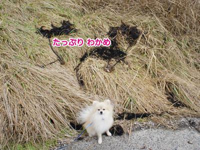 DSC034552.jpg