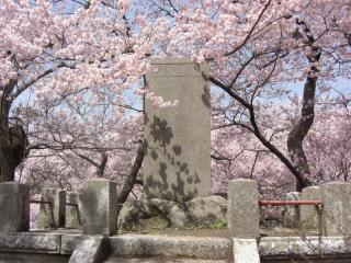高遠の桜 その3