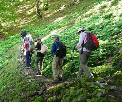 5 レンゲ坂谷を登る