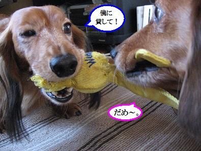 IMG_5570.jpg