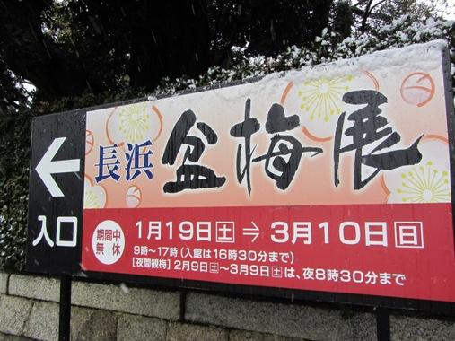 IMG_2363nagahamabonbai2013-01.jpg
