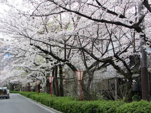 IMG_3119kamogawa201303-05.jpg