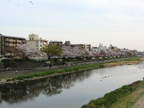 IMG_3121kamogawa201303-07.jpg