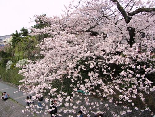 IMG_3124kamogawa201303-08.jpg