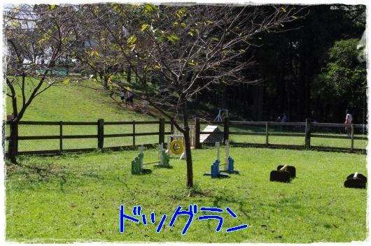 s-20110918-5.jpg