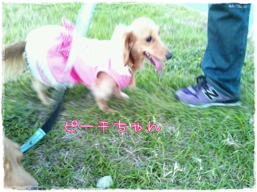 s-20111113-1.jpg