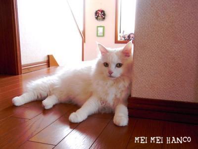 130414_meico_01.jpg