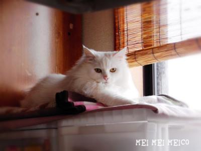 meico_130410_01.jpg