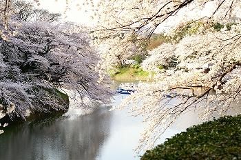 千鳥ヶ淵早朝桜2010(3)