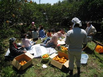 稲取産無農薬甘夏ミカン20100426(弁当タイム)