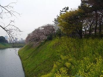 千鳥ヶ淵桜2010千鳥ヶ淵の桜