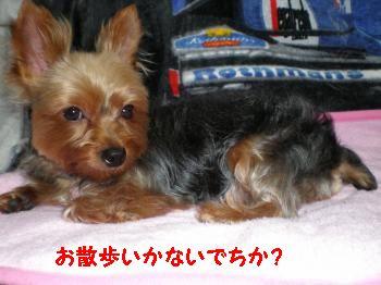 20110619214600.jpg