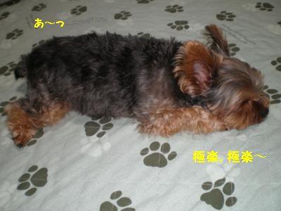 20110709230012.jpg