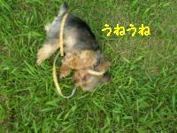 20110802215522.jpg