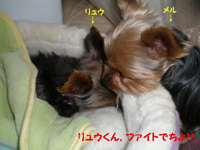 P1160017_convert_20110219233100.jpg