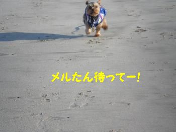 P3130324_convert_20110430140749.jpg