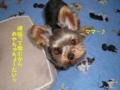 P5170568_convert_20110522145140.jpg