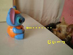 PC051018_convert_20110109141140.jpg